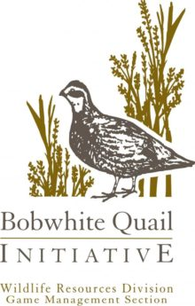 Quail Initiative